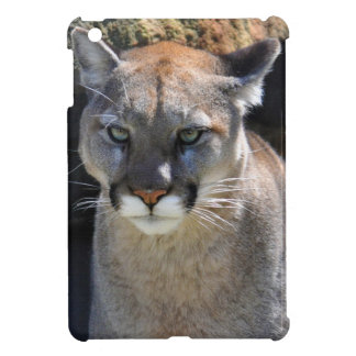 Cougar Mountain Lion Big Cat Photo iPad Case