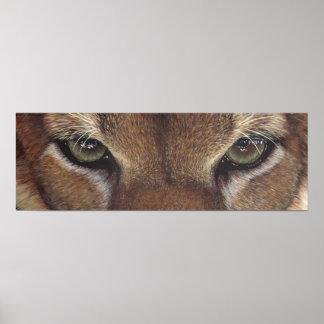 Cougar Mountain Lion Eye Poster by artbyakiko
