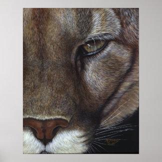Cougar Mountain Lion Face Poster