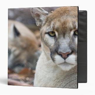 Cougar, mountain lion, Florida panther, Puma 2 Vinyl Binder