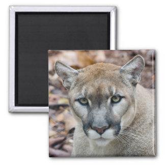 Cougar, mountain lion, Florida panther, Puma 2 Inch Square Magnet
