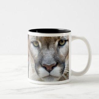 Cougar, mountain lion, Florida panther, Puma 2 Two-Tone Coffee Mug