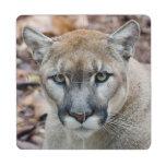 Cougar, mountain lion, Florida panther, Puma 2 Puzzle Coaster