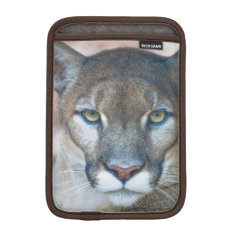 Cougar, Mountain Lion, Florida Panther, Puma 2 Sleeve For Ipad Mini at Zazzle
