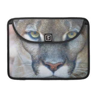Cougar, mountain lion, Florida panther, Puma 2 Sleeve For MacBook Pro