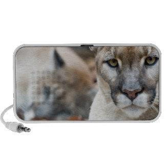 Cougar, mountain lion, Florida panther, Puma 2 iPhone Speaker