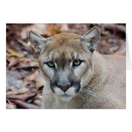 Cougar, mountain lion, Florida panther, Puma Card