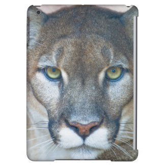 Cougar, mountain lion, Florida panther, Puma Cover For iPad Air