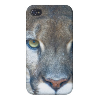 Cougar, mountain lion, Florida panther, Puma iPhone 4 Covers
