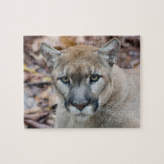 Cougar, mountain lion, Florida panther, Puma Jigsaw Puzzles
