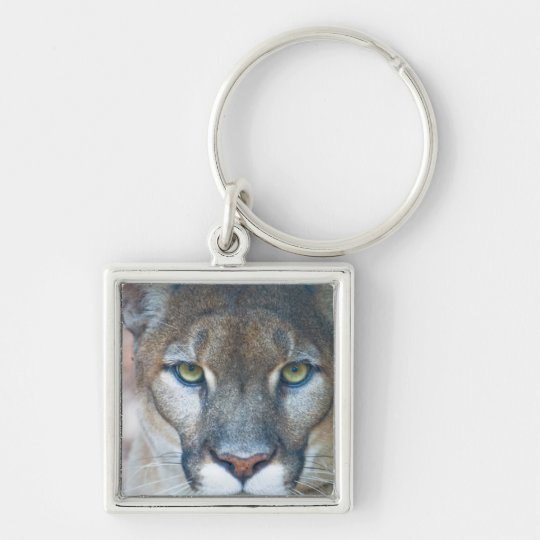 Cougar, mountain lion, Florida panther, Puma Keychain