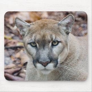 Cougar, mountain lion, Florida panther, Puma Mouse Pad
