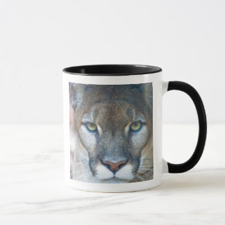 Cougar, mountain lion, Florida panther, Puma Mug