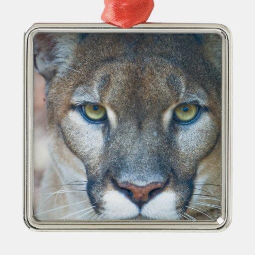 Cougar, mountain lion, Florida panther, Puma Christmas Ornaments