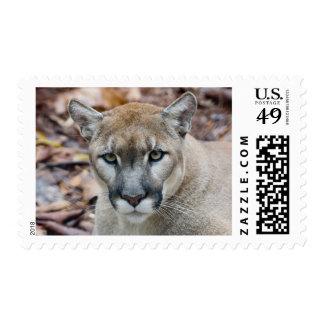 Cougar, mountain lion, Florida panther, Puma Postage Stamp