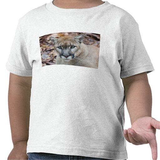 Cougar, mountain lion, Florida panther, Puma T Shirts