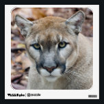 """Cougar, mountain lion, Florida panther, Puma Wall Decal<br><div class=""""desc"""">COPYRIGHT Larry Richardson / DanitaDelimont.com 