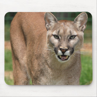 Cougar, mountain lion mouse pad