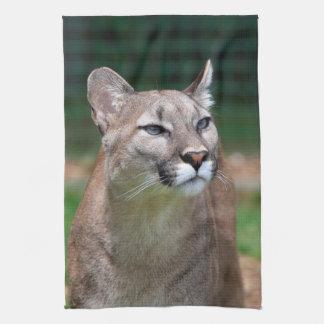 Cougar, mountain lion photo kitchen tea towel