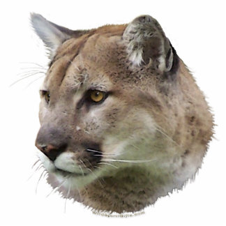 COUGAR MOUNTAIN LION (sculpted) Wildlife Gift Photo Cutouts
