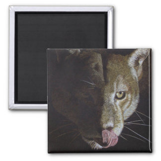 Cougar Night 2 Inch Square Magnet