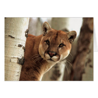 Cougar Photograph Greeting Cards