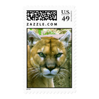 Cougar Postage Stamps