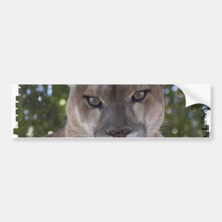 Cougar Pounce Bumper Sticker Car Bumper Sticker