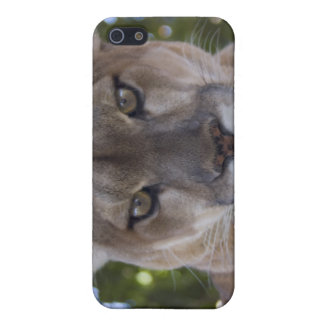 Cougar Pounce iPhone Case iPhone 5 Covers