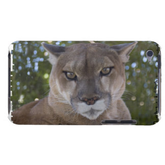 Cougar Pounce iTouch Case iPod Case-Mate Cases