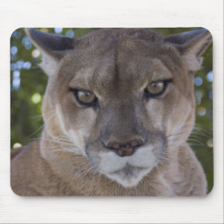 Cougar Pounce Mouse Pad