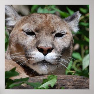Cougar Pounce Print