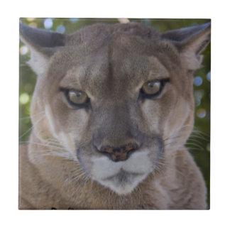 Cougar Pounce Tile