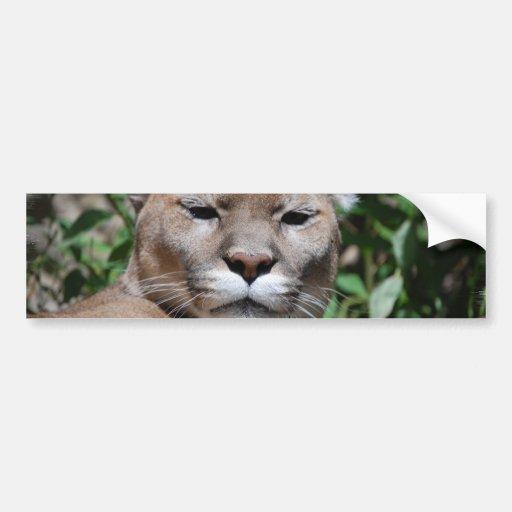 Cougar Predator Bumper Sticker