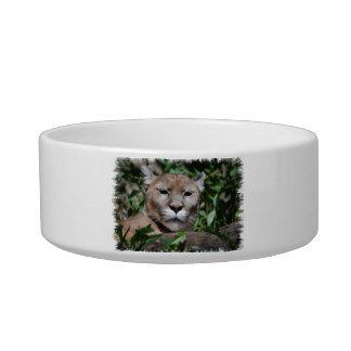 Cougar Predator Pet Bowl Cat Water Bowls