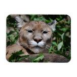 Cougar Predator Premium Magnet Vinyl Magnets