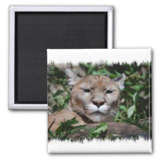 Cougar Predator Square Magnet Magnet