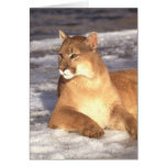 Cougar Rest Greeting Card