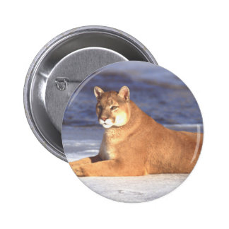 Cougar Resting 2 Inch Round Button