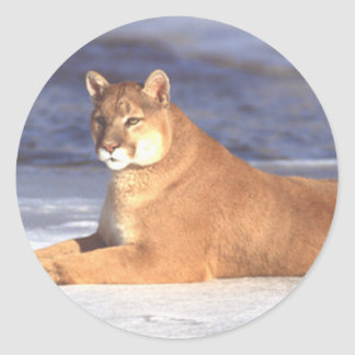 Cougar Resting Classic Round Sticker