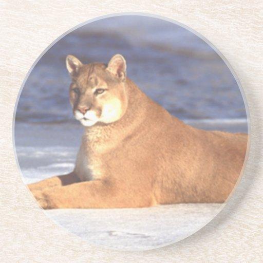 Cougar Resting Coaster