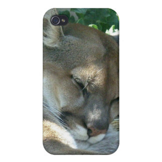 Cougar Resting iPhone Case iPhone 4/4S Cases