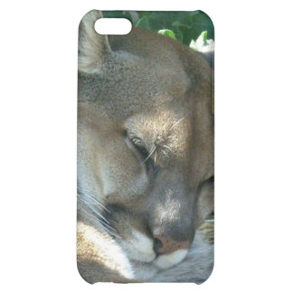 Cougar Resting iPhone Case iPhone 5C Covers