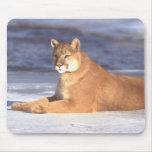 Cougar Resting Mousepad Mousepads
