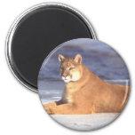 Cougar Resting Refrigerator Magnet