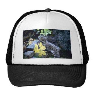Cougar-six week old cub trucker hat