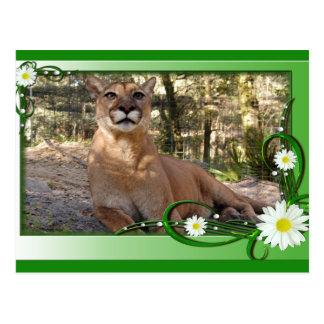 cougar-st-patricks-0042 tarjeta postal