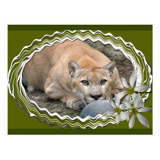 cougar-st-patricks-0054 postal