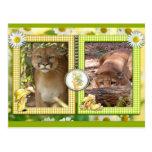 cougar-st-patricks-0061 postal