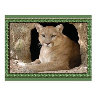 cougar-st-patricks-0065 postal